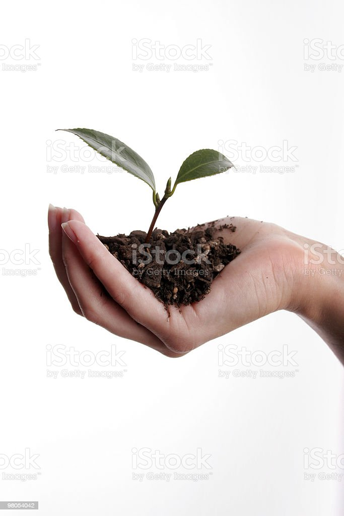 Seedling in hand new life royalty-free stock photo