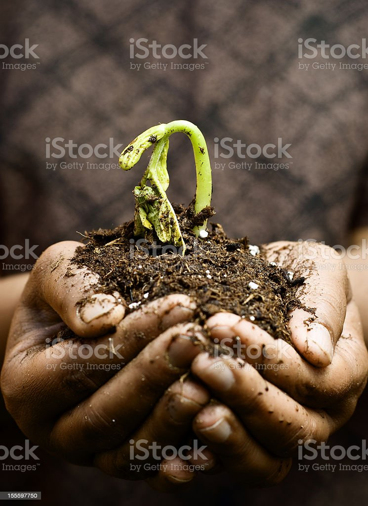 Seedling in hands stock photo
