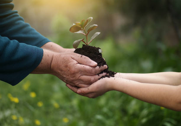 Seedling little plant in child hands stock photo