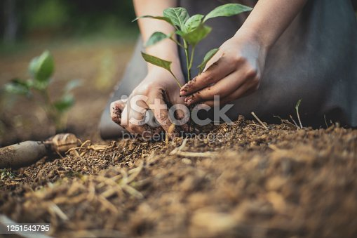 Photo depicting a gardener's hands putting a seedling into the soil and supporting its stem so it can gain stability before its properly buried.