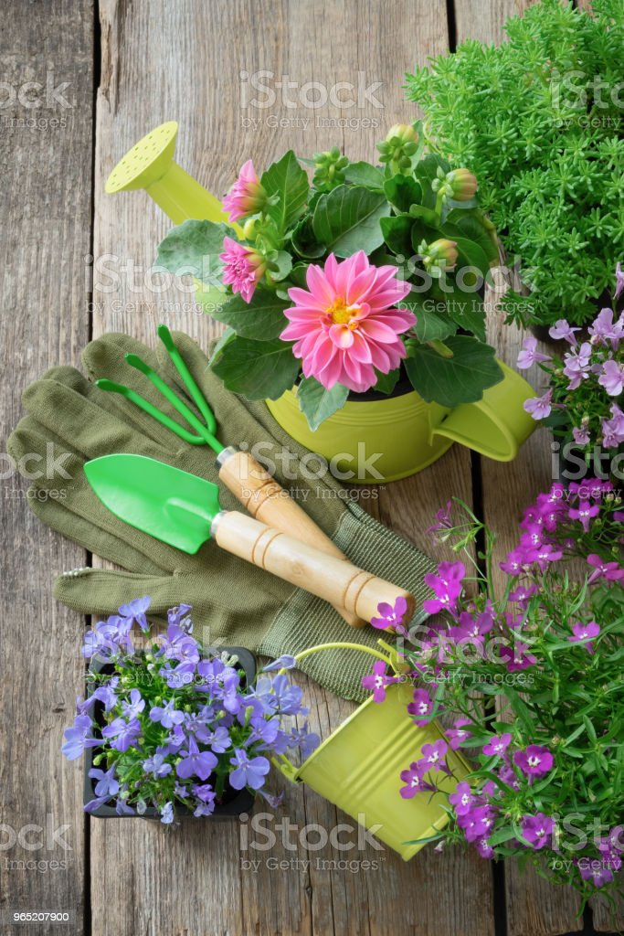 Seedling of garden plants and flowers for planting. Garden equipment: watering can, shovel, rake. Top view. zbiór zdjęć royalty-free