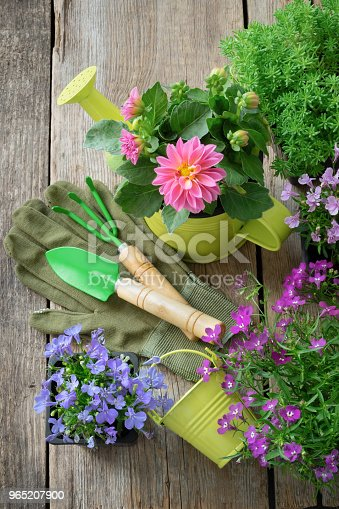 Seedling Of Garden Plants And Flowers For Planting Garden Equipment Watering Can Shovel Rake Top View - Stockowe zdjęcia i więcej obrazów Bez ludzi