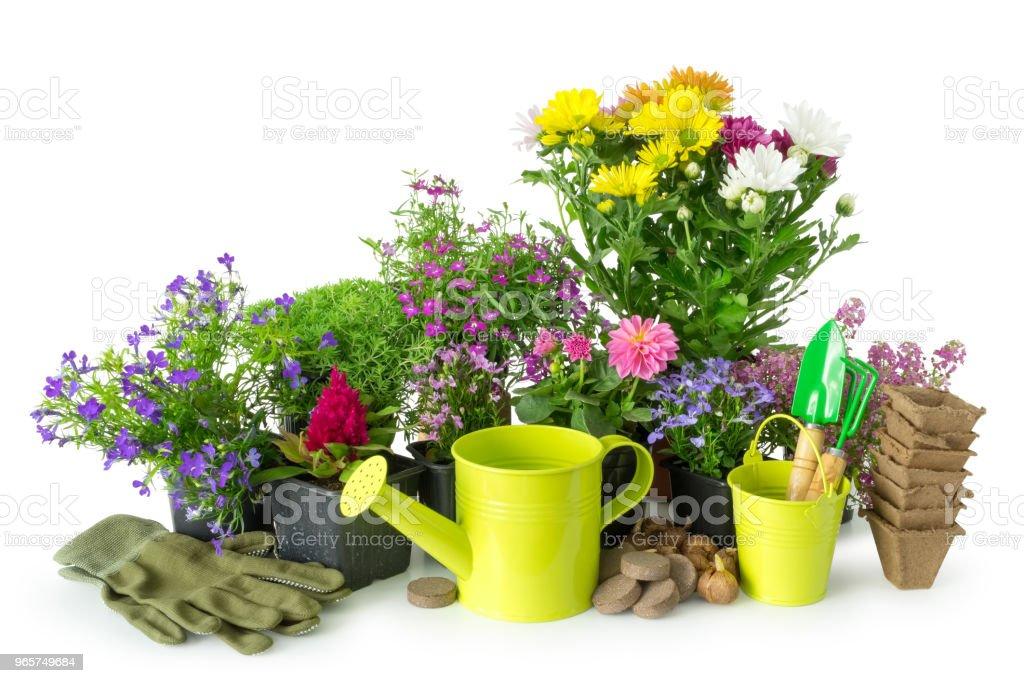 Zaailing van tuin planten en bloemen. Tuin van apparatuur: water kan, emmer, potten, schop, hark op wit. - Royalty-free Apparatuur Stockfoto