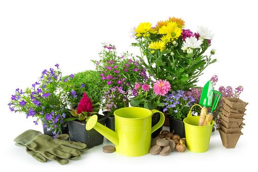 Zaailing Van Tuin Planten En Bloemen Tuin Van Apparatuur Water Kan Emmer Potten Schop Hark Op Wit Stockfoto en meer beelden van Apparatuur