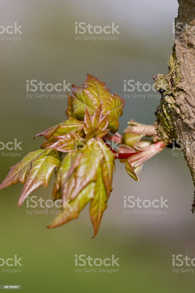 seedling of tree royalty-free stock photo