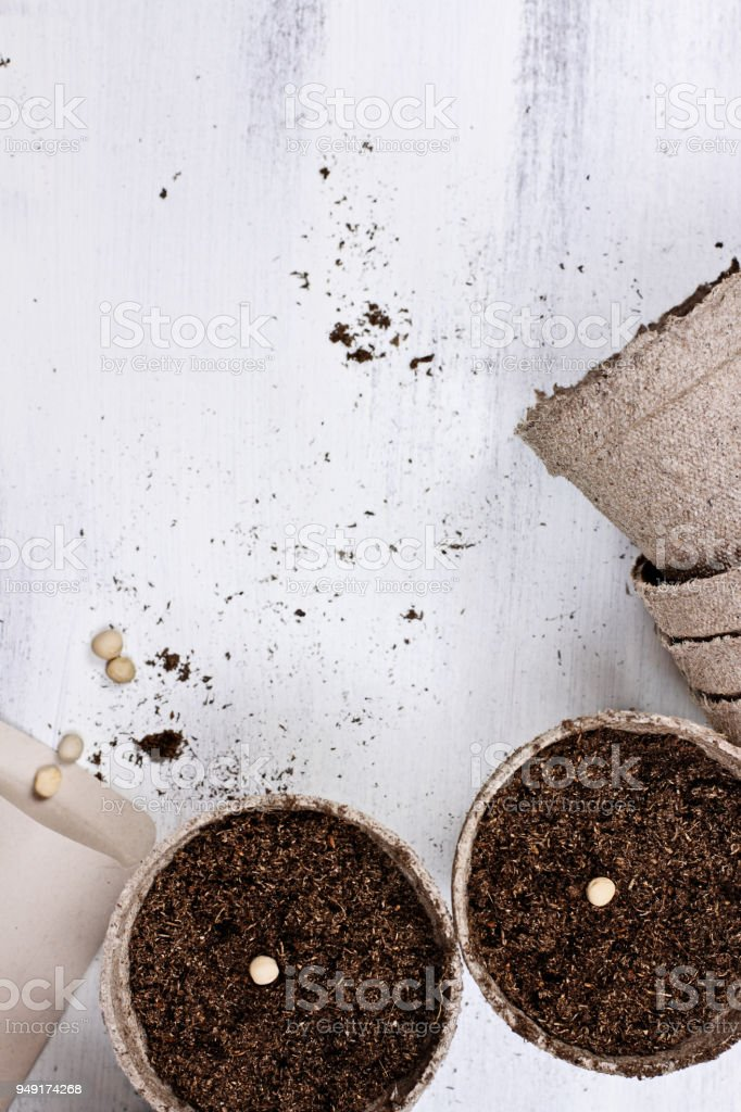 Seedling Peat Pots and Seeds stock photo