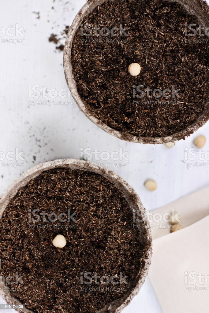 Seedling Peat Pots over Wooden Background stock photo