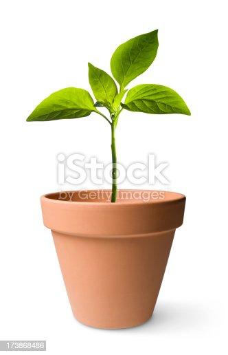 istock Seedling 173868486