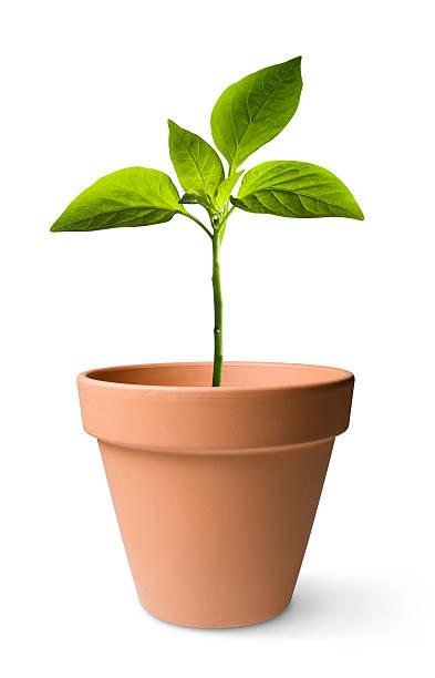 seedling - bloempot stockfoto's en -beelden