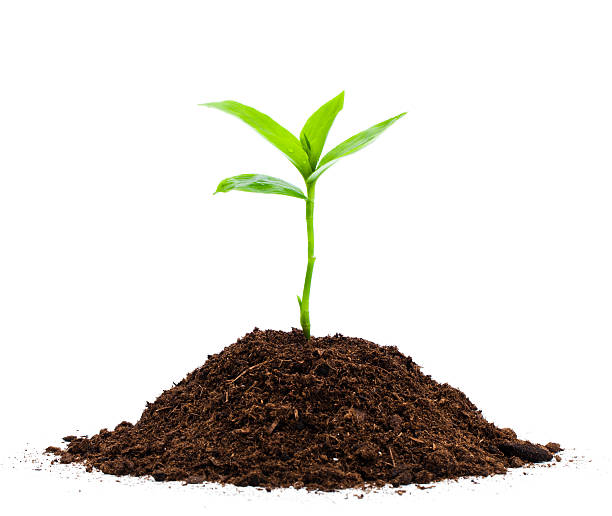 seedling - aluxum stock pictures, royalty-free photos & images