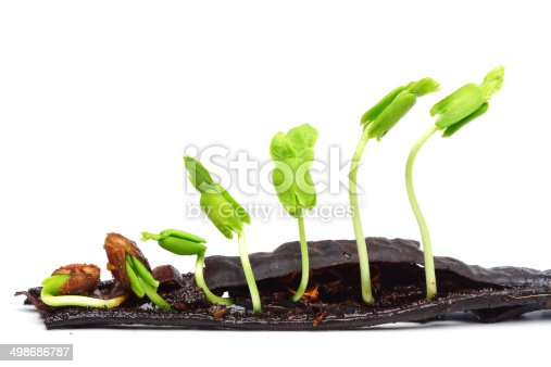 147512291 istock photo seedling 498686787