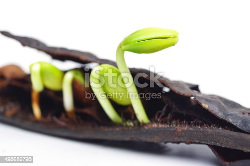147512291 istock photo seedling 498686793