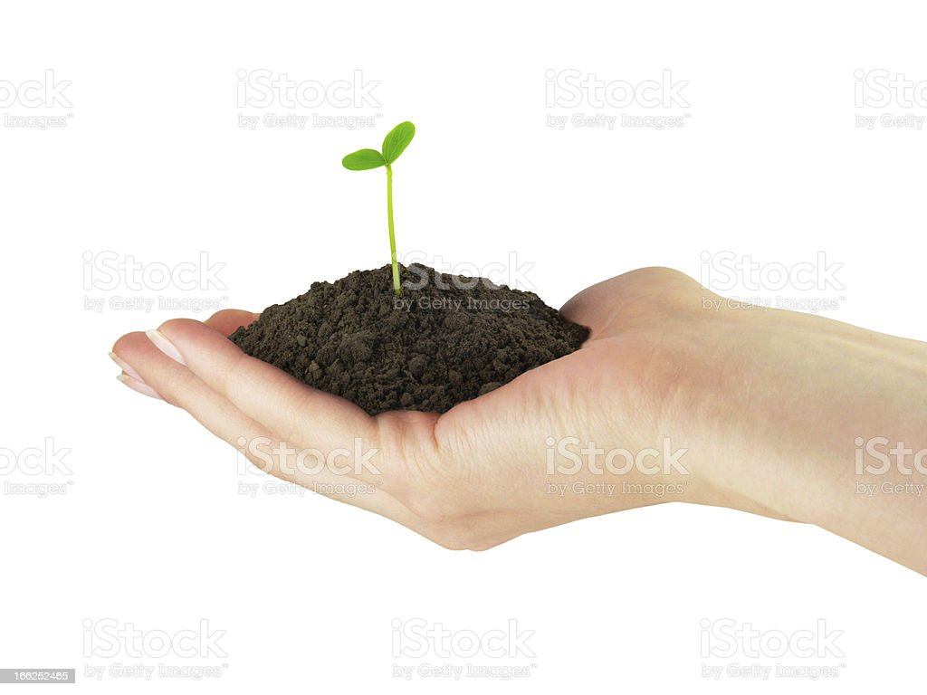 Seedling plant in the hand royalty-free stock photo