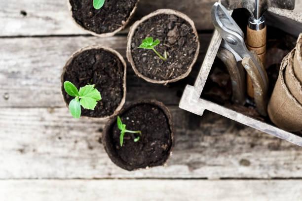 Saatgut bereit, im Garten gepflanzt zu werden – Foto