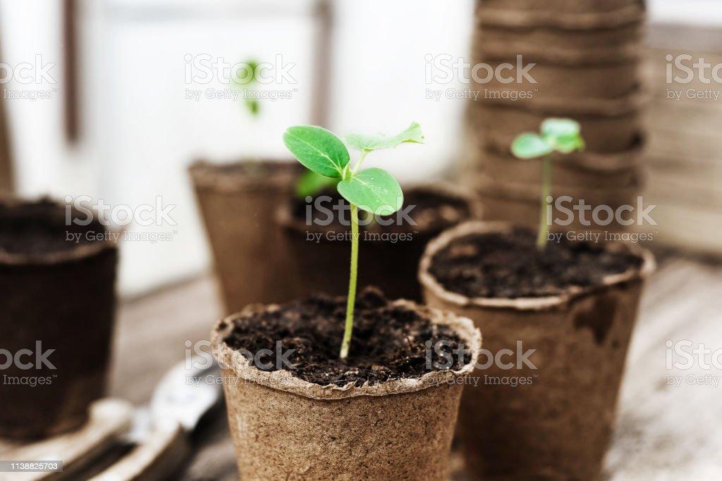 苗木準備在花園裡種植 - 免版稅健康的生活方式圖庫照片