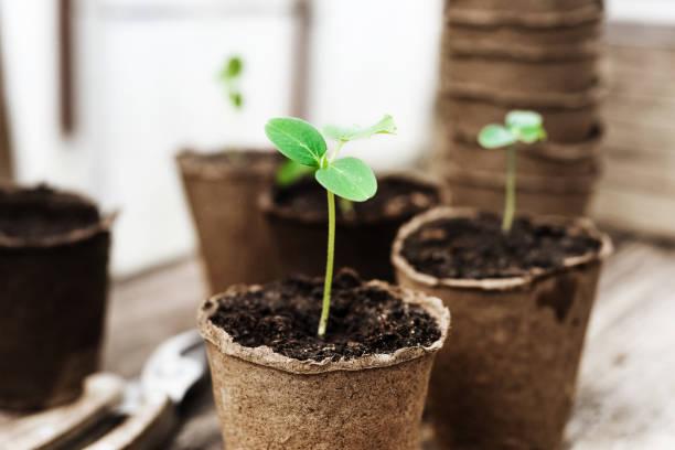 saatgut bereit, im garten gepflanzt zu werden - kern stock-fotos und bilder