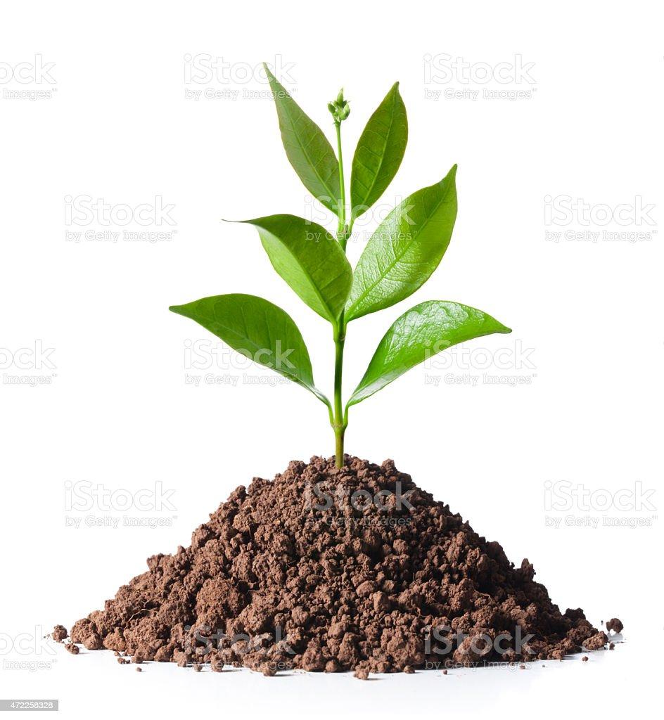 SeedlingNew plant stock photo