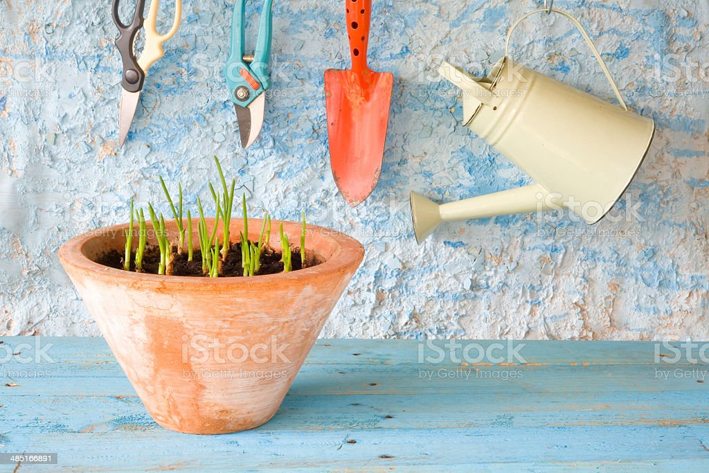 seedlings and gardening tools stock photo