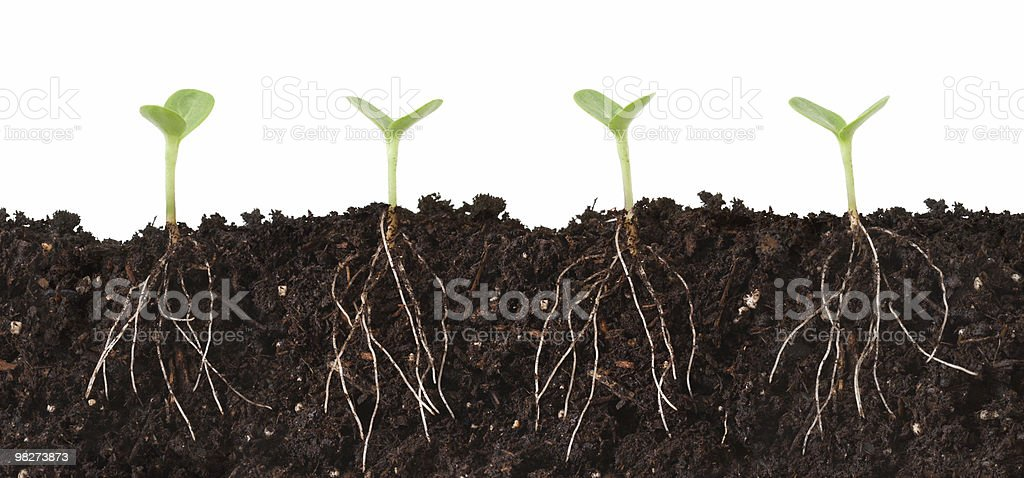Seedlings and Roots Cutaway stock photo