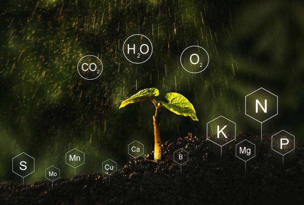 Seedlings are exuberant from abundant loamy soils. Development and  role of nutrients in plant life with digital mineral nutrients icon. stock photo