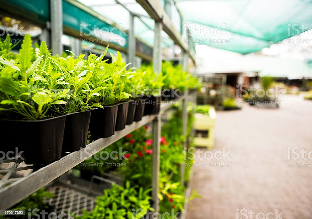 Seedlings at garden center stock photo