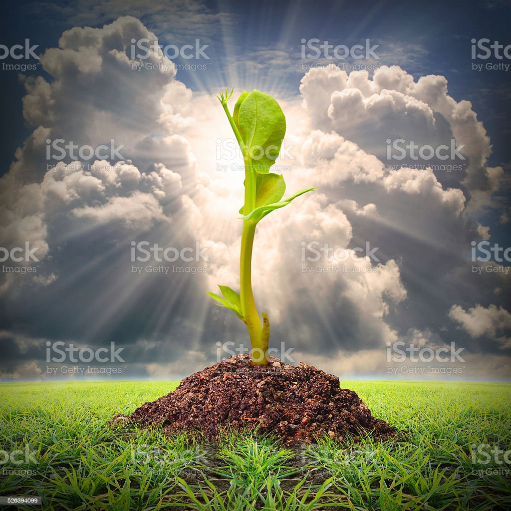 Seedlings growth. stock photo