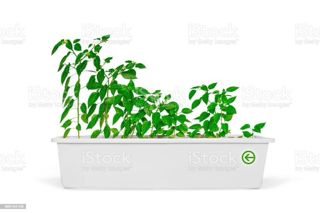 Plantor i en kruka som isolerade över vita - Royaltyfri Blomkruka Bildbanksbilder