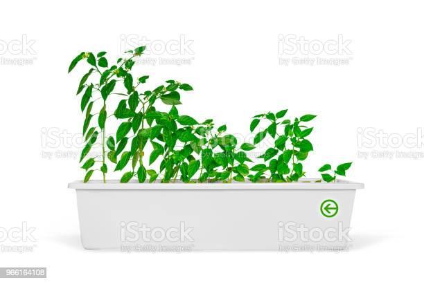Plantor I En Kruka Som Isolerade Över Vita-foton och fler bilder på Blomkruka