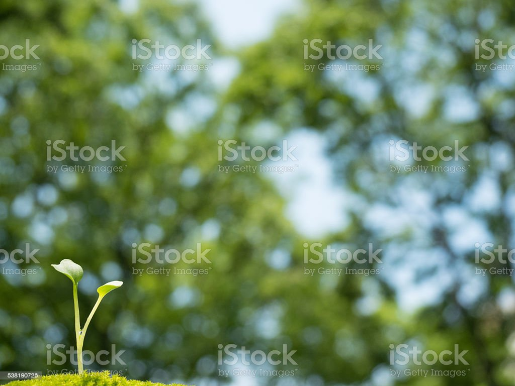 Seedlings in the fresh green stock photo