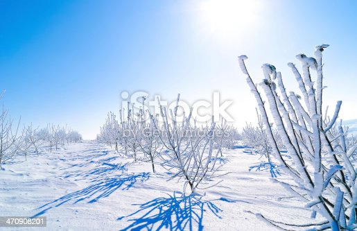 young garden on a cold day in winter covered with snow