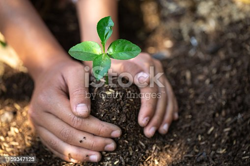 The hands of a teenage boy who is taking care of the growing seedlings on fertile soil.Natural care concepts and world preservation, global warming reduction. World Environment Day.