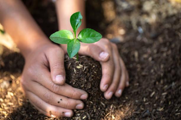 bereketli toprakta fide. doğal bakım kavramları ve dünya koruma, küresel ısınma azaltma. dünya çevre günü. - diken bitki niteliği stok fotoğraflar ve resimler