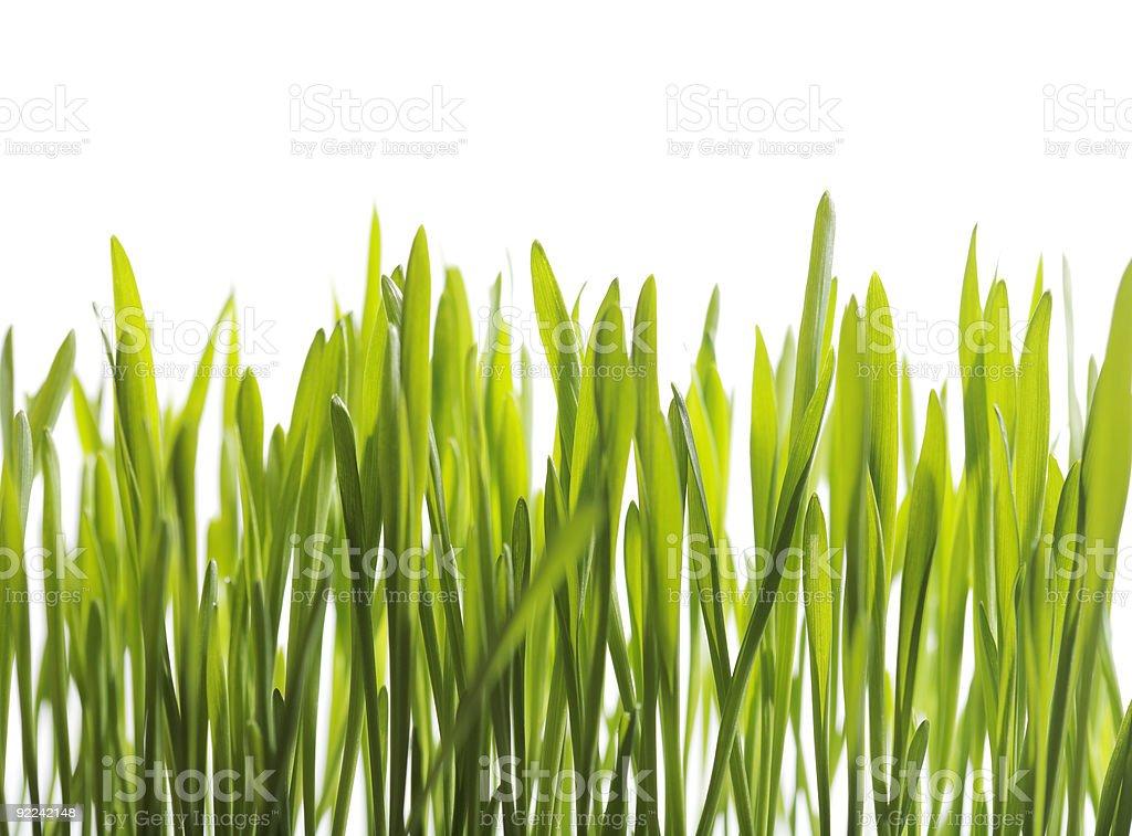 Seedlings royalty-free stock photo