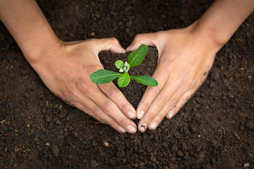 915680272 istock photo Seedlings that grow from complete soil Human hands are making heart-shaped symbols to protect seedlings, the concept of caring for seedlings and the soil. Save the world by planting trees. 1210159910