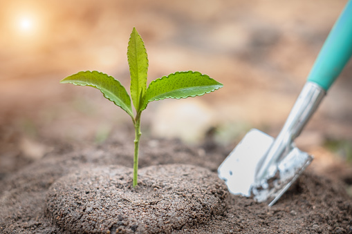 912882270 istock photo Seedlings that grow from the soil and planting spoons.World environment day concept Caring for seedlings that will grow Plant trees that are environmentally friendly.Planting to reduce global warming. 1239884319