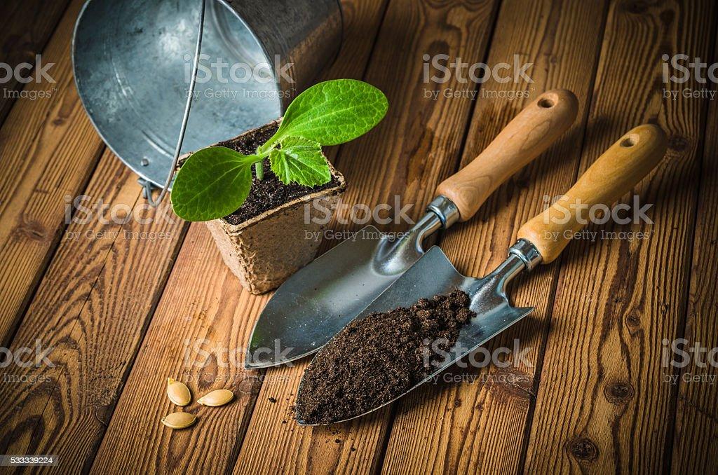 Setzlinge zucchini und Garten-tools auf einem hölzernen Oberfläche – Foto