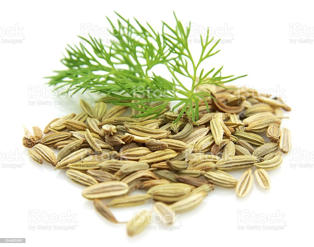 Seeds and a fennel branch stock photo