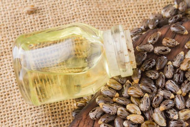 種子和蓖麻油 - ricin 個照片及圖片檔