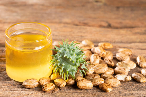 種子和檸檬油-利西斯公社 - ricin 個照片及圖片檔