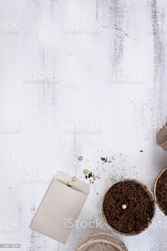Seeds and Seedling Peat stock photo