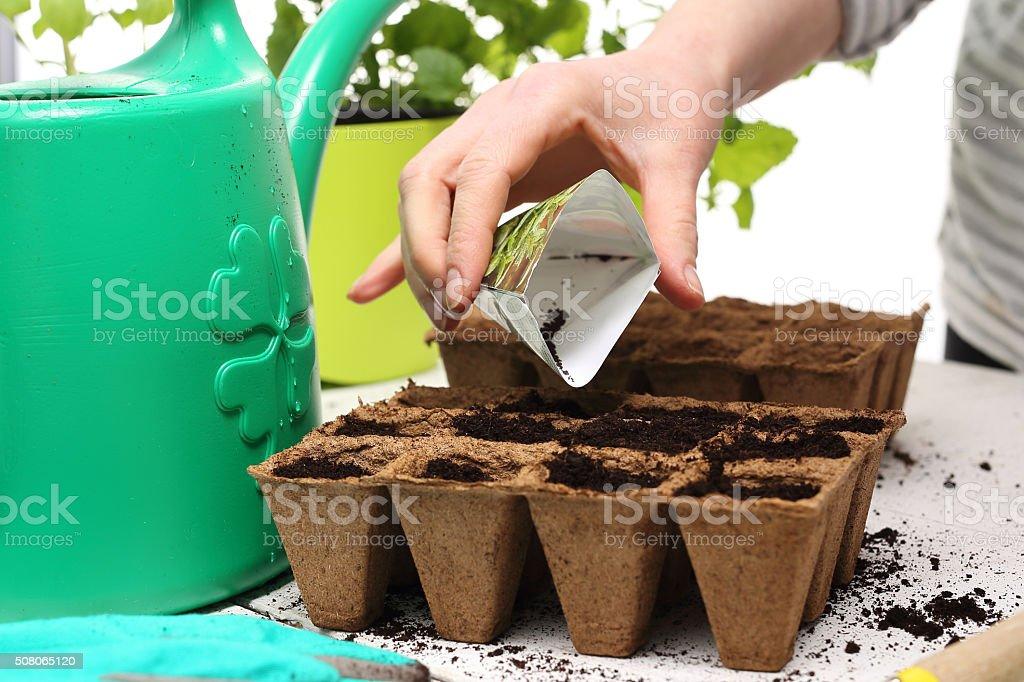 Samen, Gärtner bereitet der Samen oder Setzlinge – Foto