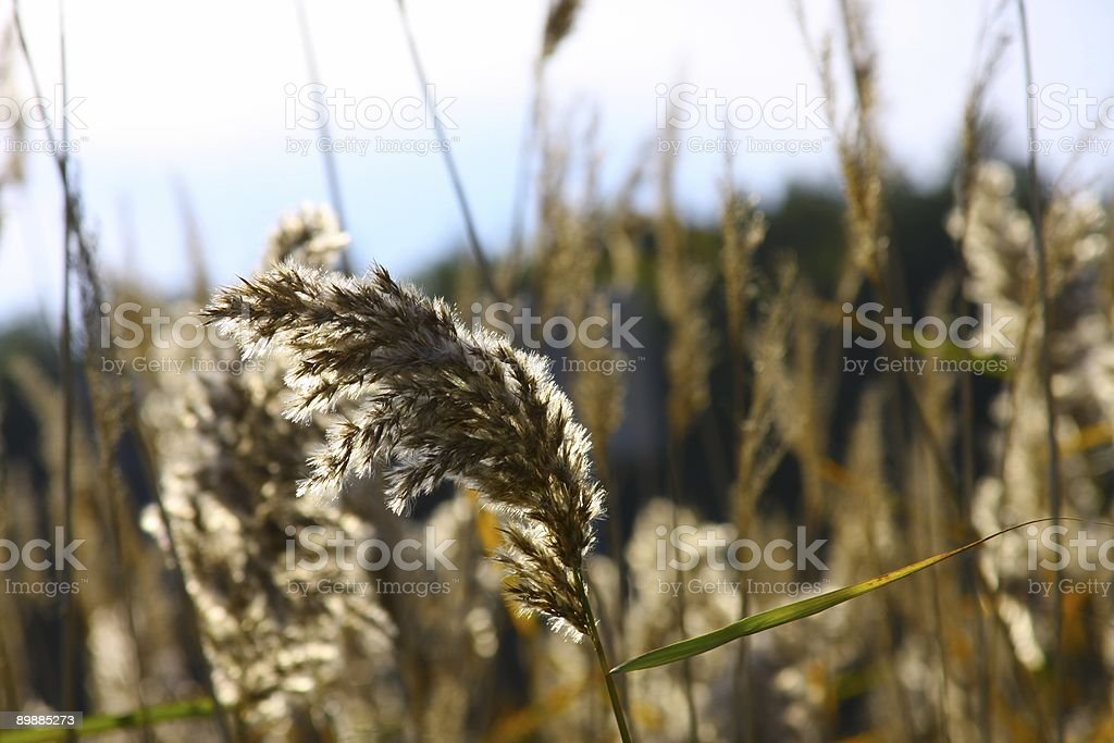 Seeds in the sun royalty-free stock photo
