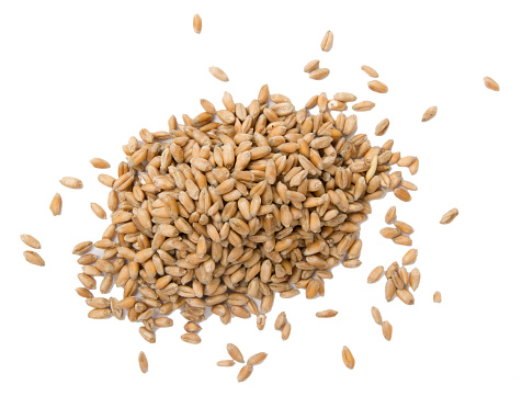 Pile of wheat seeds isolated on white