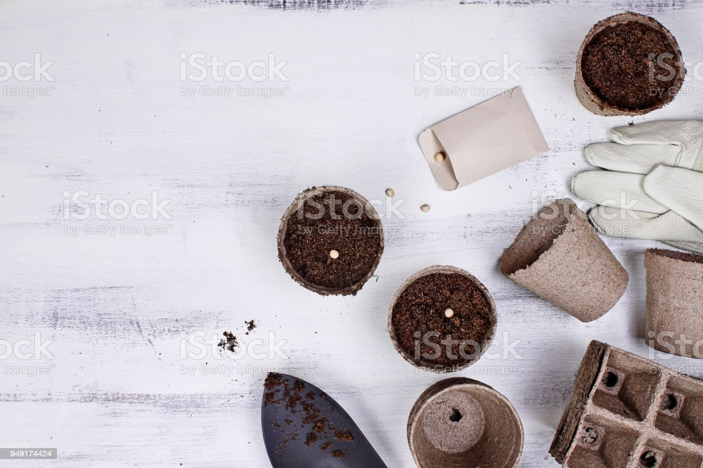 Seeds Seedling Peat Pots and Garden Tools stock photo