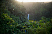 Beautiful and scenic view of a waterfall surrounded by trees, and plants in a thick tropical forest on the island of Hawaii.