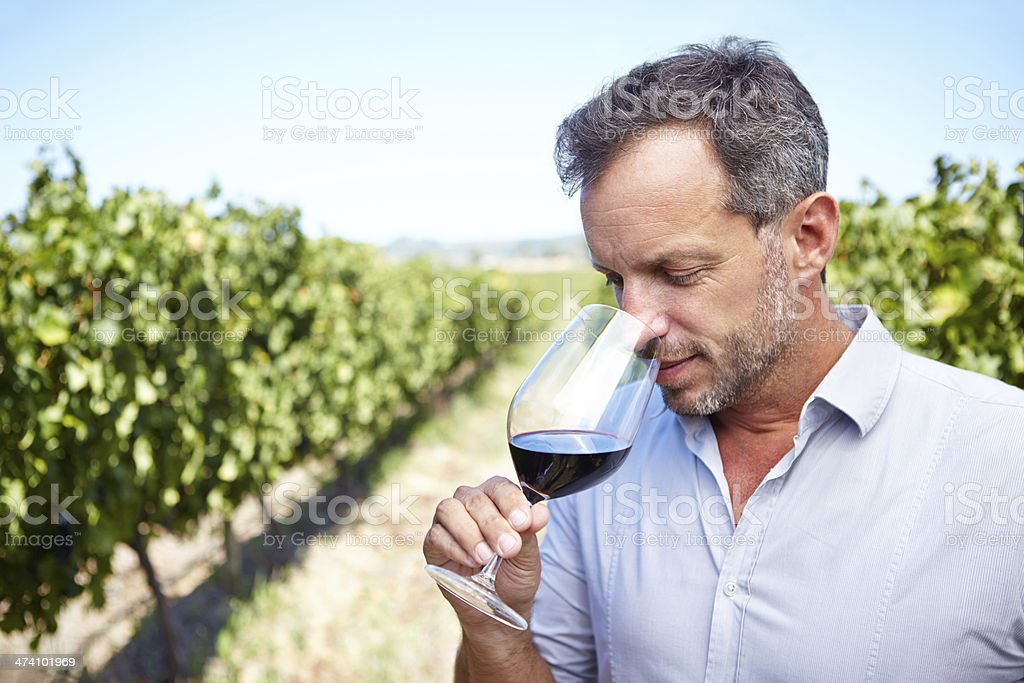 Seeking to prepare his palate for the wine's flavor royalty-free stock photo