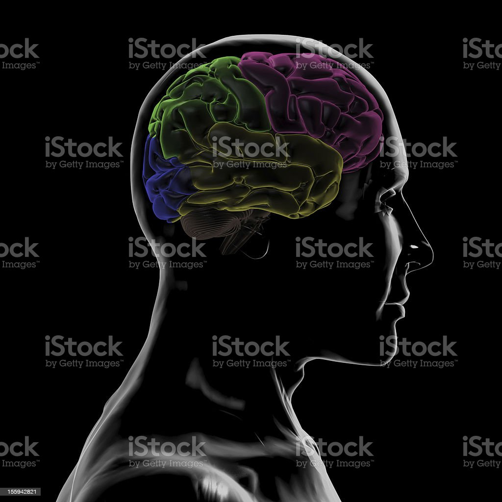 See-Through Right-side of the head and Brain stock photo
