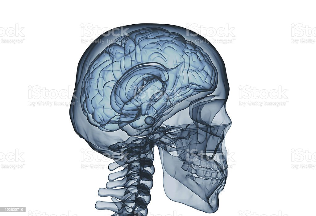 Seethrough View Of A Human Skull And Brain Stock Photo & More ...