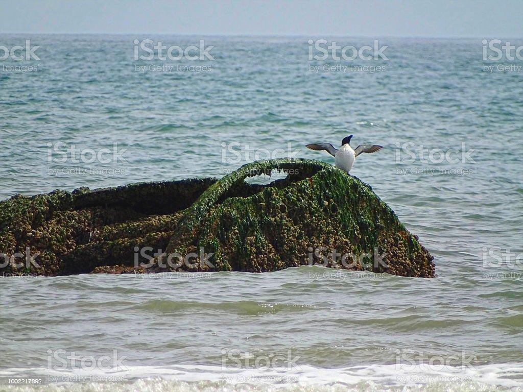 Seevögel am Strand – Foto