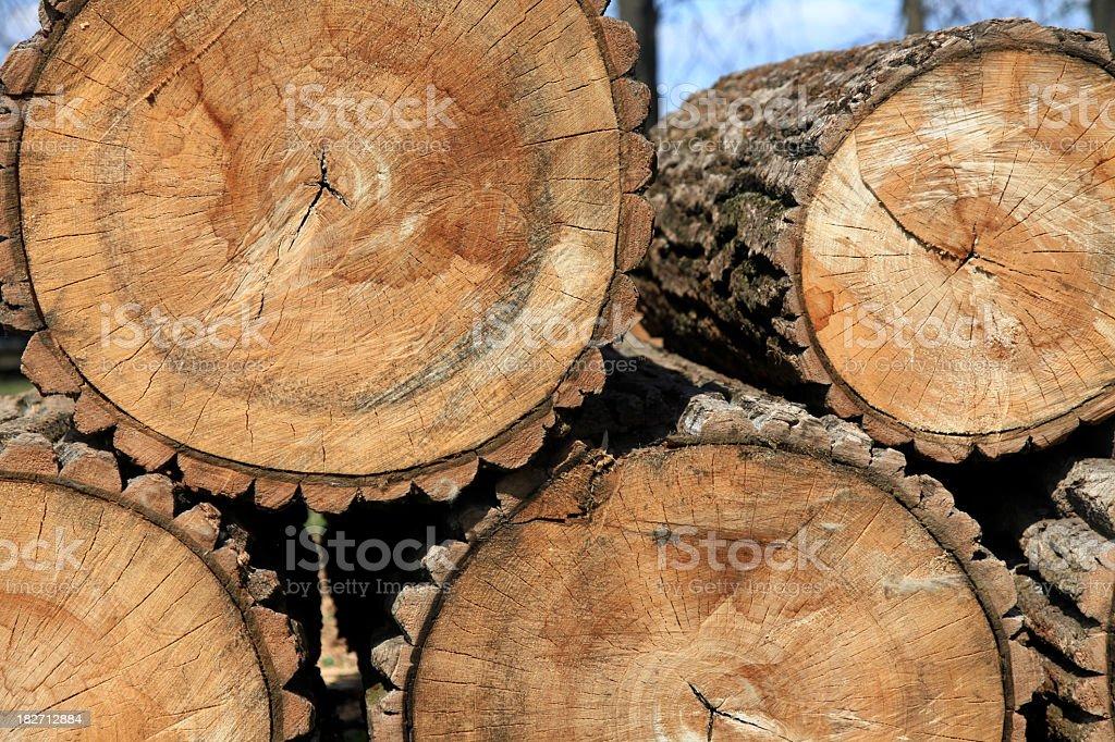Segmented trees stock photo